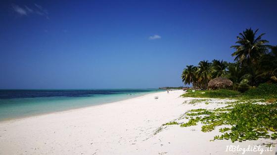 cayo levisa spiaggia palme mare