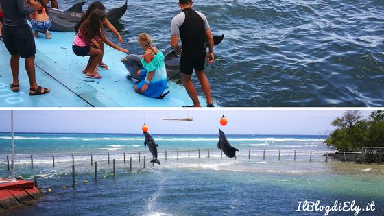 2 giorni a cienfuegos delfini