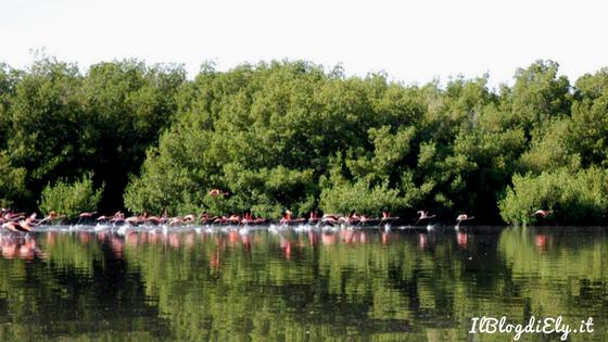 laguna guanaroca fenicotteri rosa